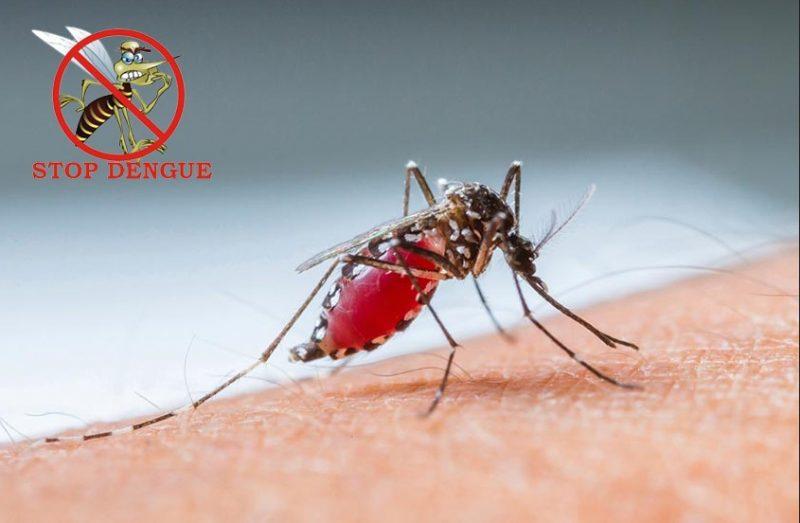 Homeopathic Medicine for Dengue